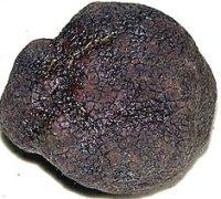 Photo of a truffle courtesy of Wikimedia.