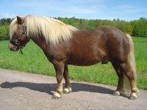 Chocolate horse by Oyssol