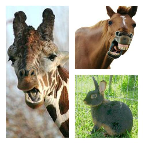 Chocolate colored giraffe, horse and rabbit.  Source: Wikimedia Commons